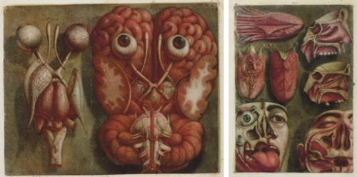 Anatomy art human toolkit