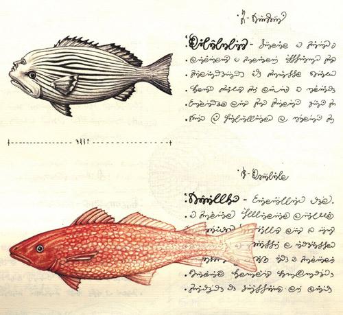Codex fish species