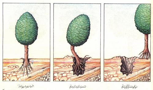Codex moving trees