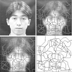 fractal profile of human face
